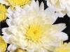 Crete White