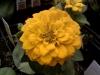 Magellan Yellow