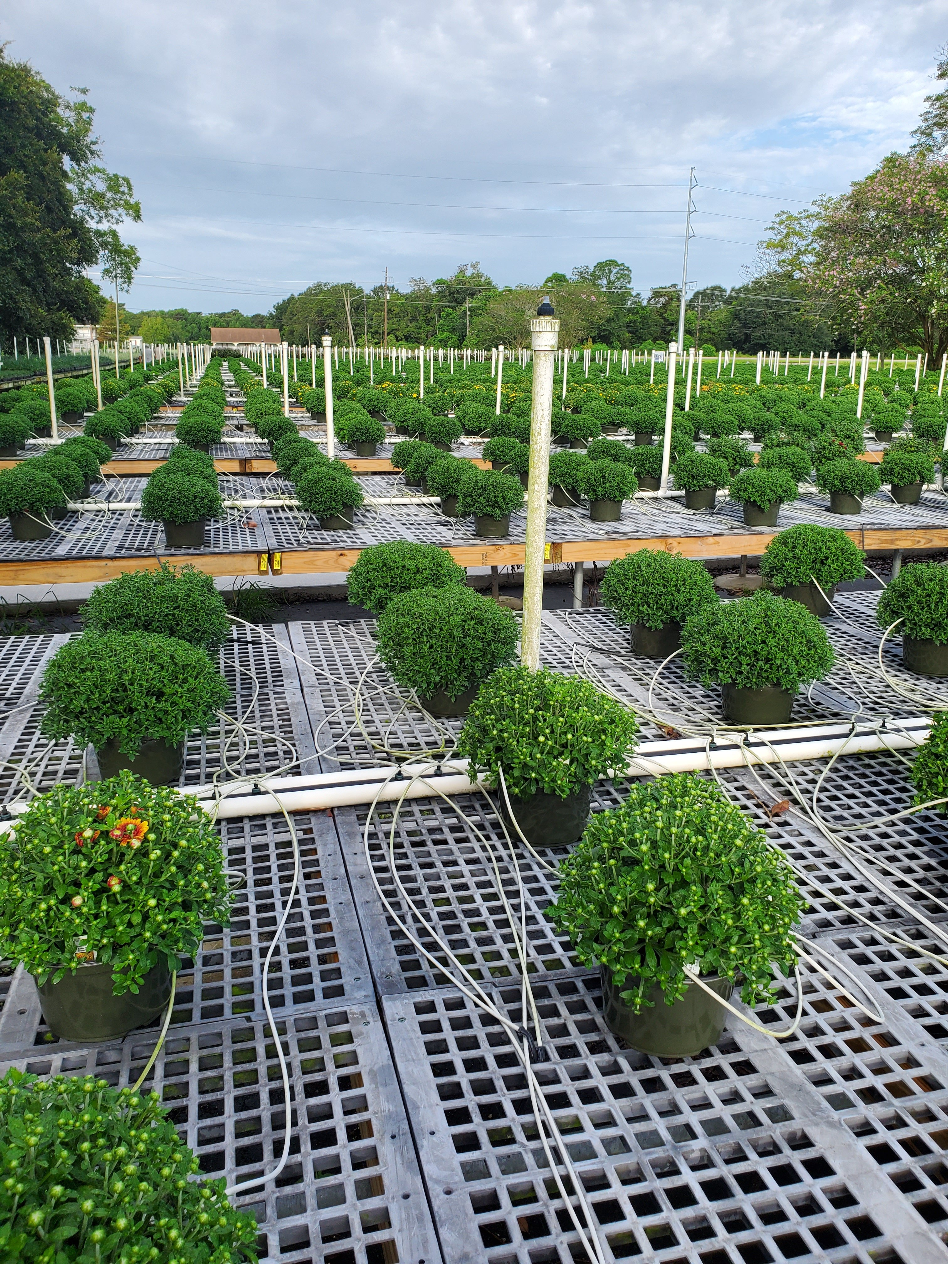 Langridge Plant Sales, Inc  | Committed to Excellent Service